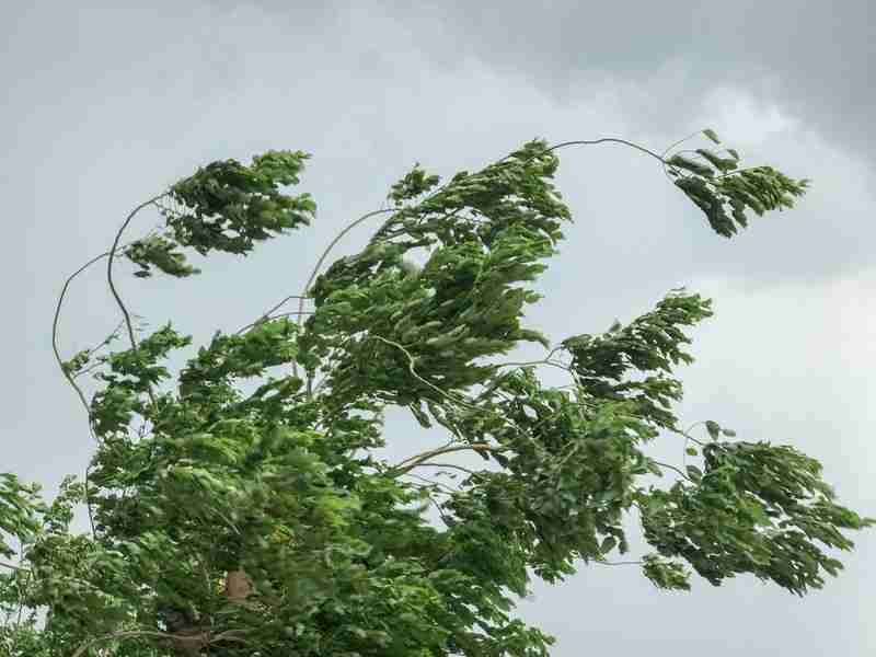 Amber Warning Of Wind Issued For Region