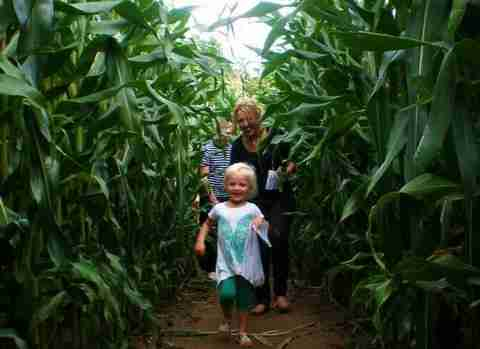 A-maize-ing Fun at Award Winning Attraction