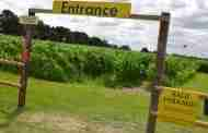 Farm Park Set To Open Its Annual Maize Maze