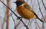 Buds and Bird Song Walk