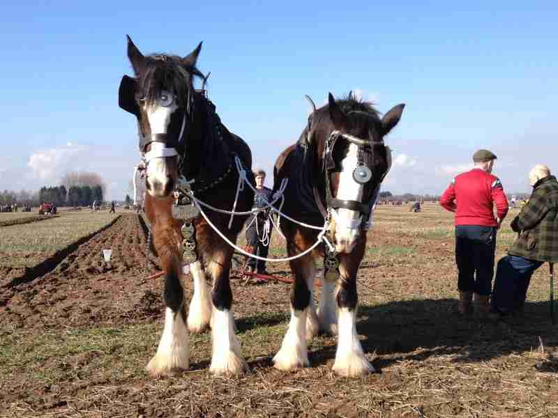 Ploughmen Ready For Annual Charity Matches